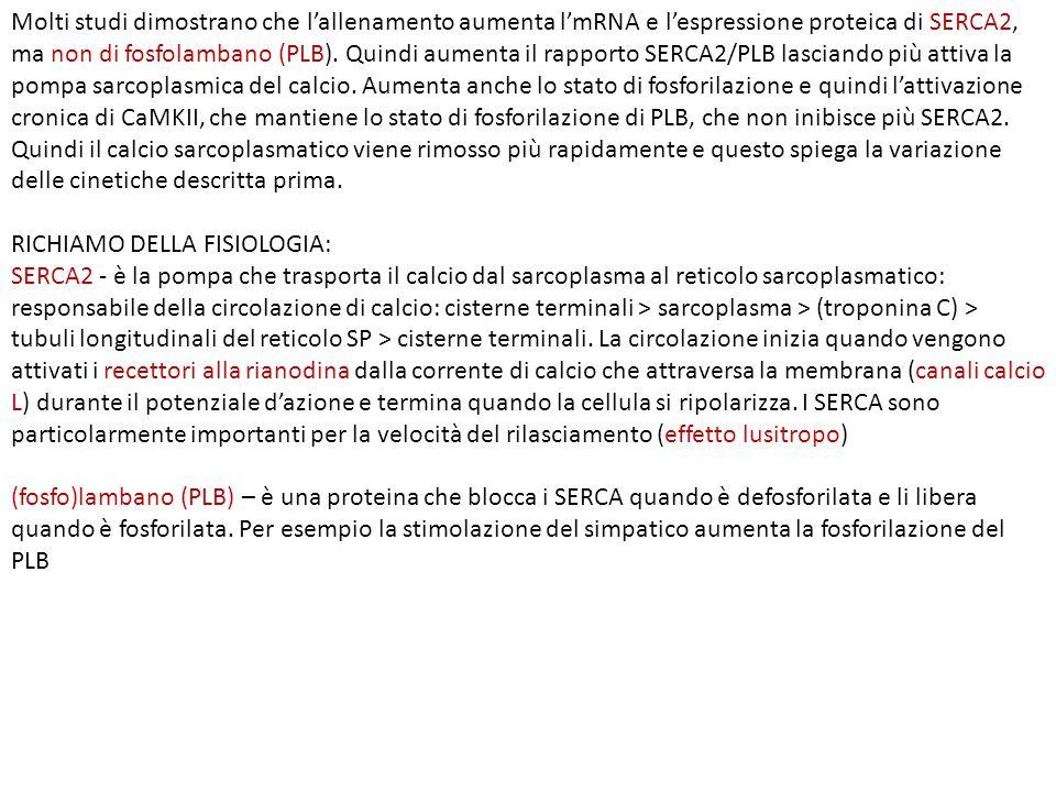 RICHIAMO DELLA FISIOLOGIA: SERCA2 - è la pompa che trasporta il calcio dal sarcoplasma al reticolo sarcoplasmatico: responsabile della circolazione di