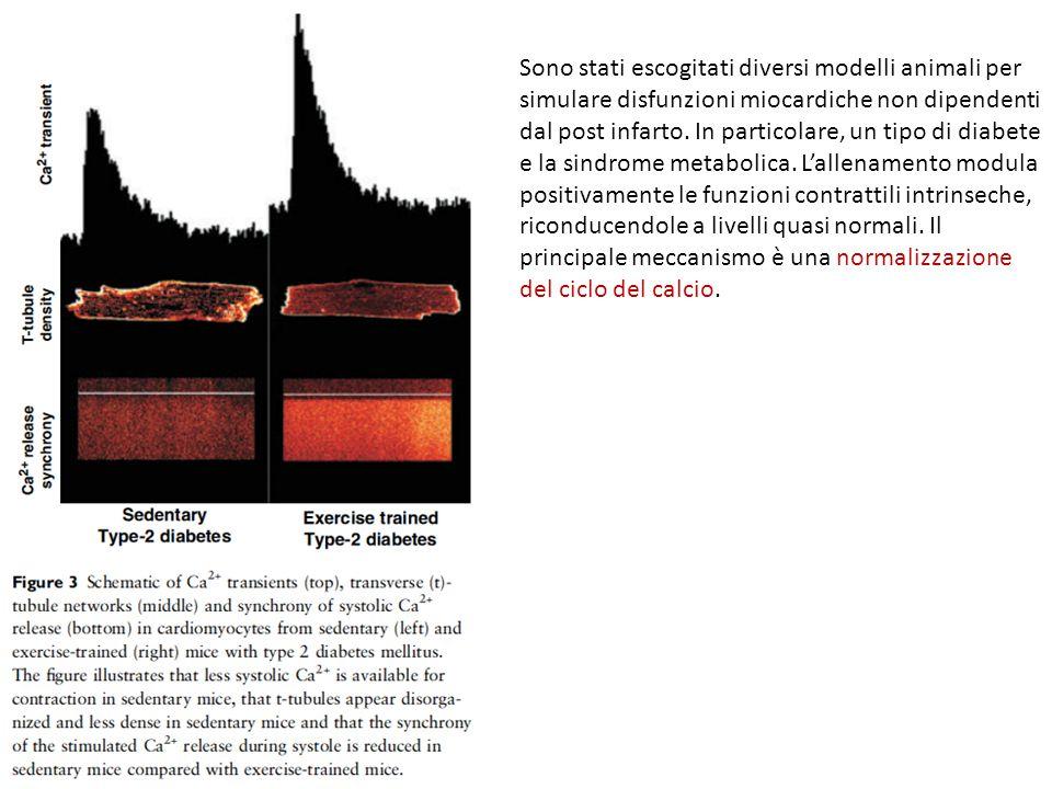 Sono stati escogitati diversi modelli animali per simulare disfunzioni miocardiche non dipendenti dal post infarto. In particolare, un tipo di diabete