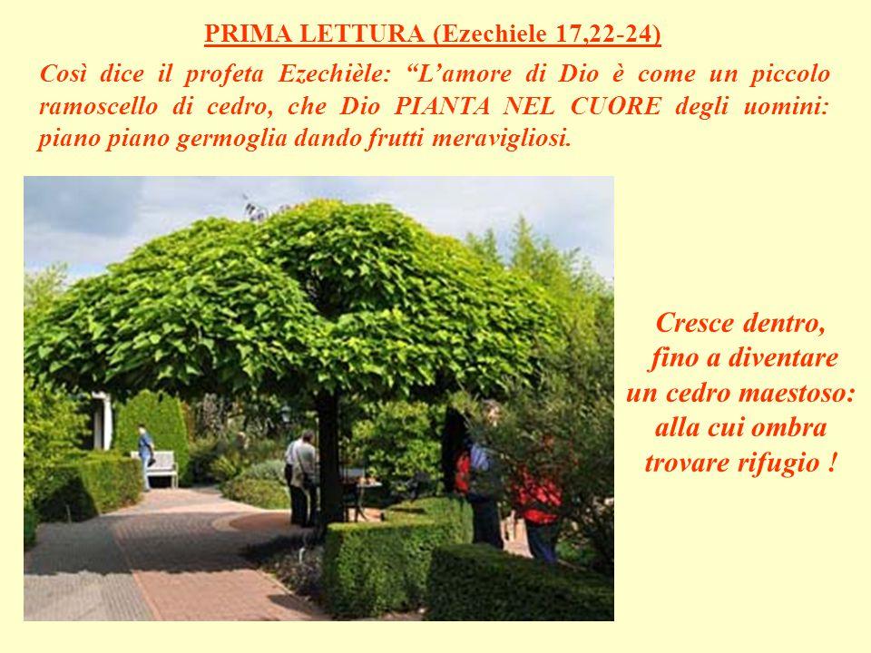 Così dice il profeta Ezechièle: L'amore di Dio è come un piccolo ramoscello di cedro, che Dio PIANTA NEL CUORE degli uomini: piano piano germoglia dando frutti meravigliosi.