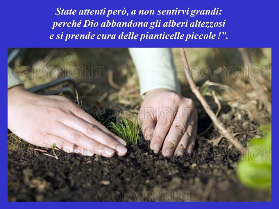 State attenti però, a non sentirvi grandi: perché Dio abbandona gli alberi altezzosi e si prende cura delle pianticelle piccole ! .