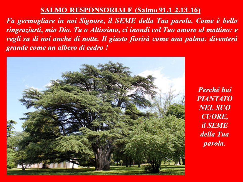 SALMO RESPONSORIALE (Salmo 91,1-2.13-16) Fa germogliare in noi Signore, il SEME della Tua parola.
