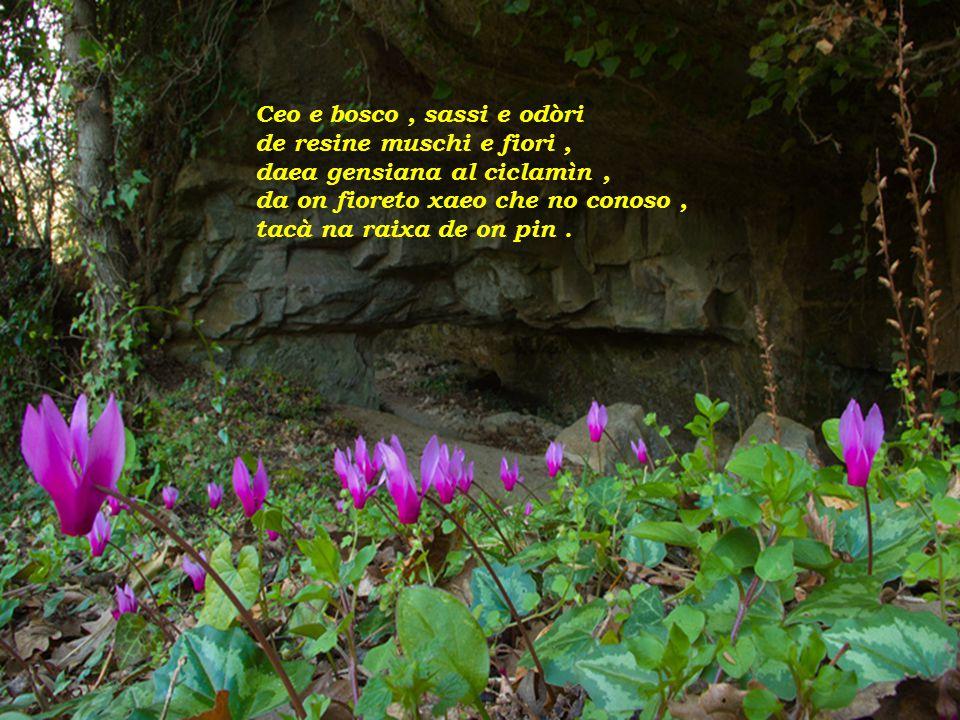 Ceo e bosco, sassi e odòri de resine muschi e fiori, daea gensiana al ciclamìn, da on fioreto xaeo che no conoso, tacà na raixa de on pin.