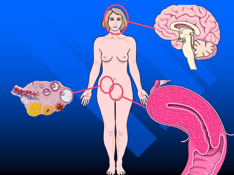 FSH LH estrogeni progesterone GnRH