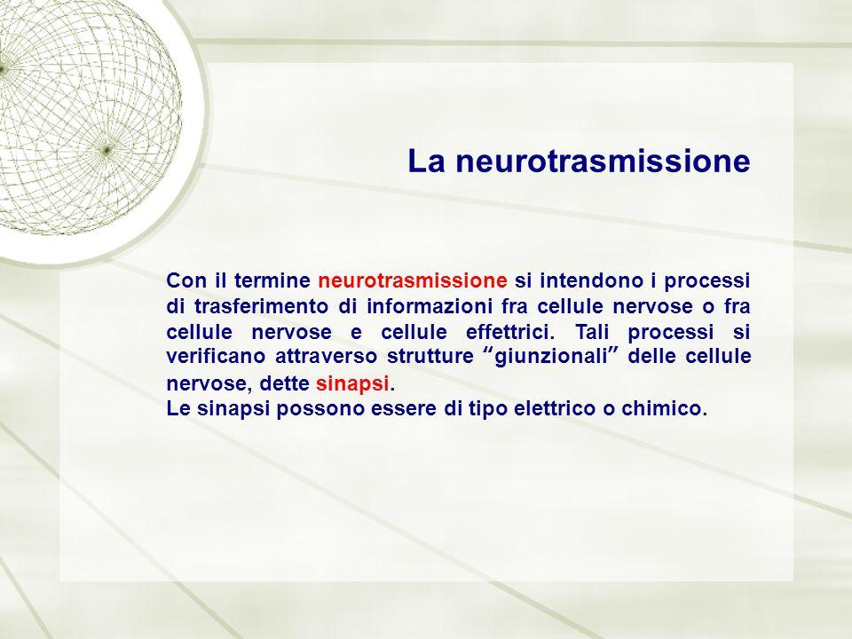 La neurotrasmissione Con il termine neurotrasmissione si intendono i processi di trasferimento di informazioni fra cellule nervose o fra cellule nervo