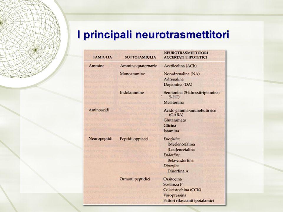 I principali neurotrasmettitori
