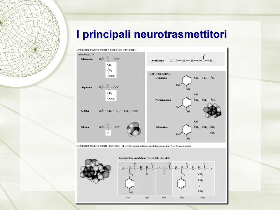 I recettori dei neurotrasmettitori I recettori dei neurotrasmettitori appartengono a due categorie: Recettori ionotropi (canali ionici a controllo di ligando, (proteine transmembrana che determinano perturbazioni del potenziale di membrana della cellula, immediate ma superficiali)(A) Recettori metabotropi (proteine transmembrana che determinano cambiamenti metabolici lenti ma a volte globali e a lungo termine all'interno della cellula)(B)