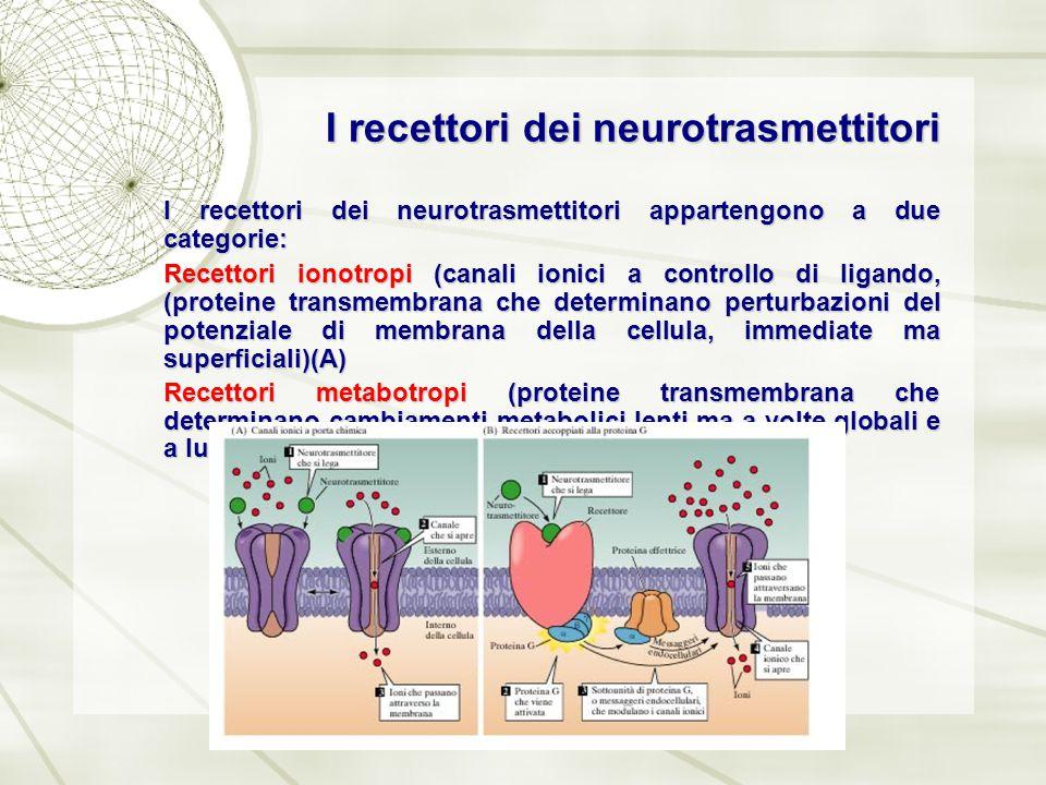 I recettori dei neurotrasmettitori I recettori dei neurotrasmettitori appartengono a due categorie: Recettori ionotropi (canali ionici a controllo di