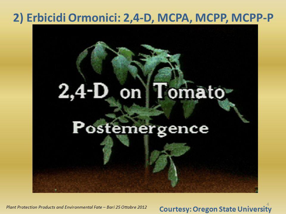 2,4-D estere (8 - 25°C) Volatile, resiste dilavamento 2,4-D sale (10 - 25°C) Non volatile, ma dilavabile MCPA (10-25°C) MCPP, MCPP-P (8 - 25°C) 2) Erbicidi ormonici: ancora fondamentali nel diserbo dei cereali Intervallo d'impiego di 2,4- D, MCPA, MCPP, MCPP-P Plant Protection Products and Environmental Fate – Bari 25 Ottobre 2012 5
