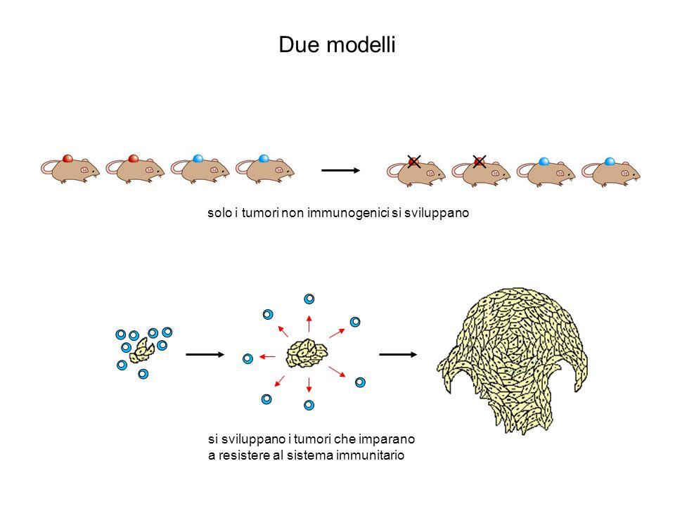 Due modelli solo i tumori non immunogenici si sviluppano si sviluppano i tumori che imparano a resistere al sistema immunitario