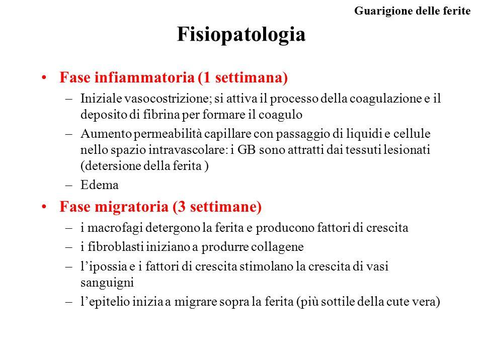 Guarigione delle ferite Fisiopatologia Fase infiammatoria (1 settimana) –Iniziale vasocostrizione; si attiva il processo della coagulazione e il depos