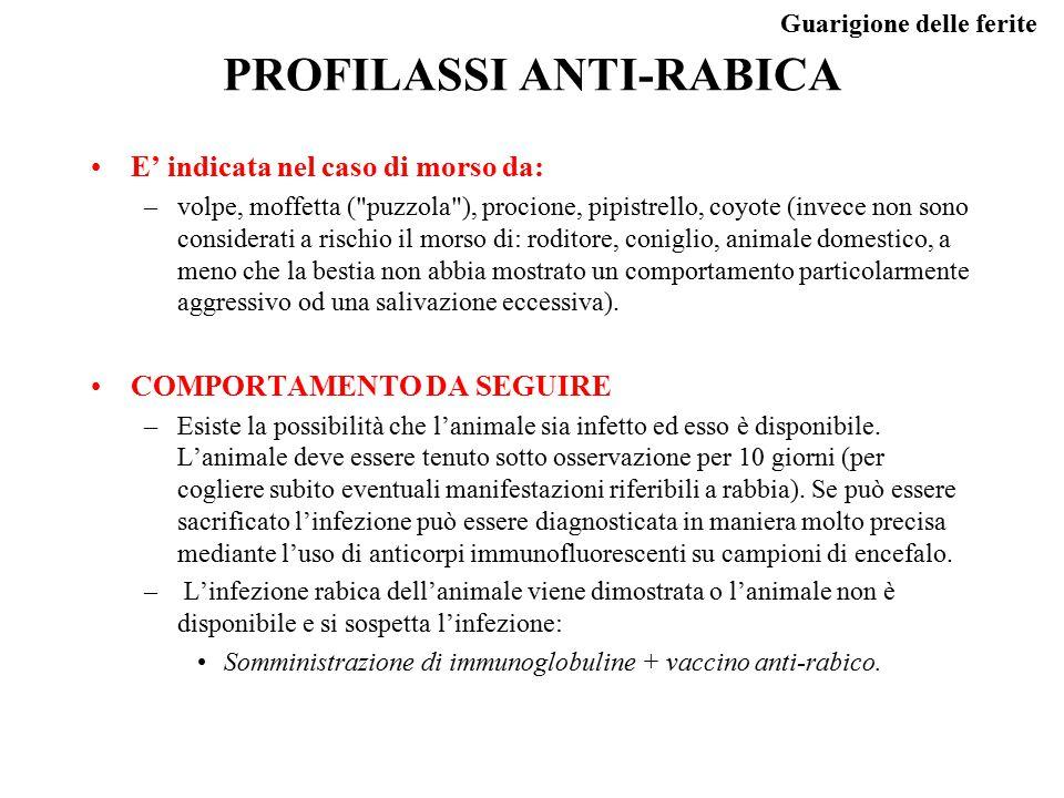 Guarigione delle ferite PROFILASSI ANTI-RABICA E' indicata nel caso di morso da: –volpe, moffetta (