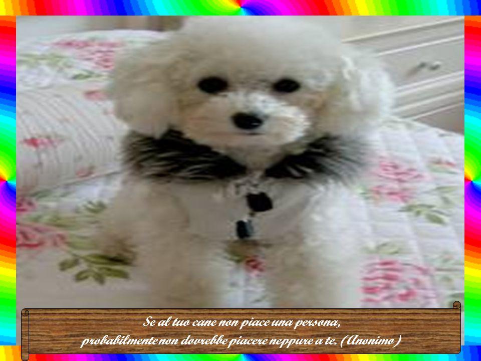 In principio Dio creò l'uomo. Poi vedendolo così debole, gli donò il cane. (A. Toussenel)