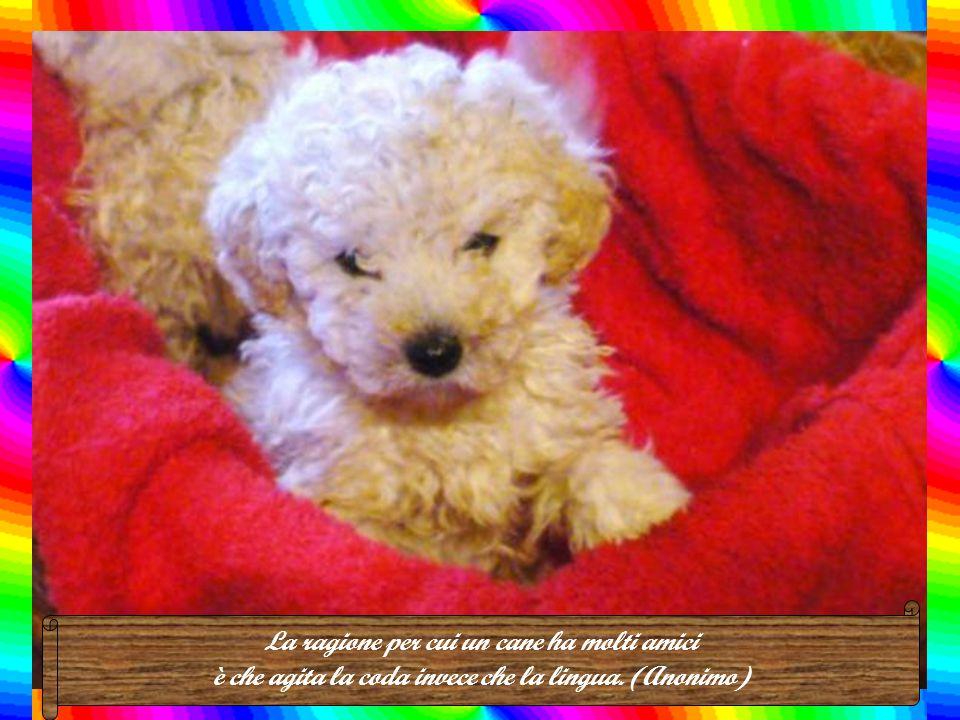 Il cane è un gentiluomo. Spero di andare nel suo paradiso, non in quello degli uomini. (Mark Twain)