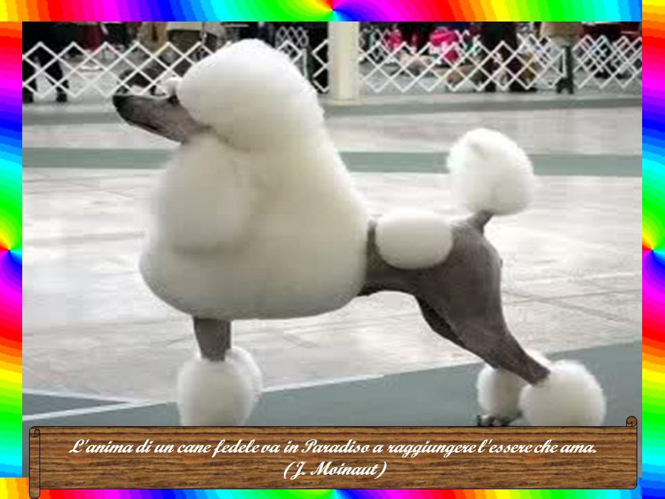 La ragione per cui un cane ha molti amici è che agita la coda invece che la lingua. (Anonimo)