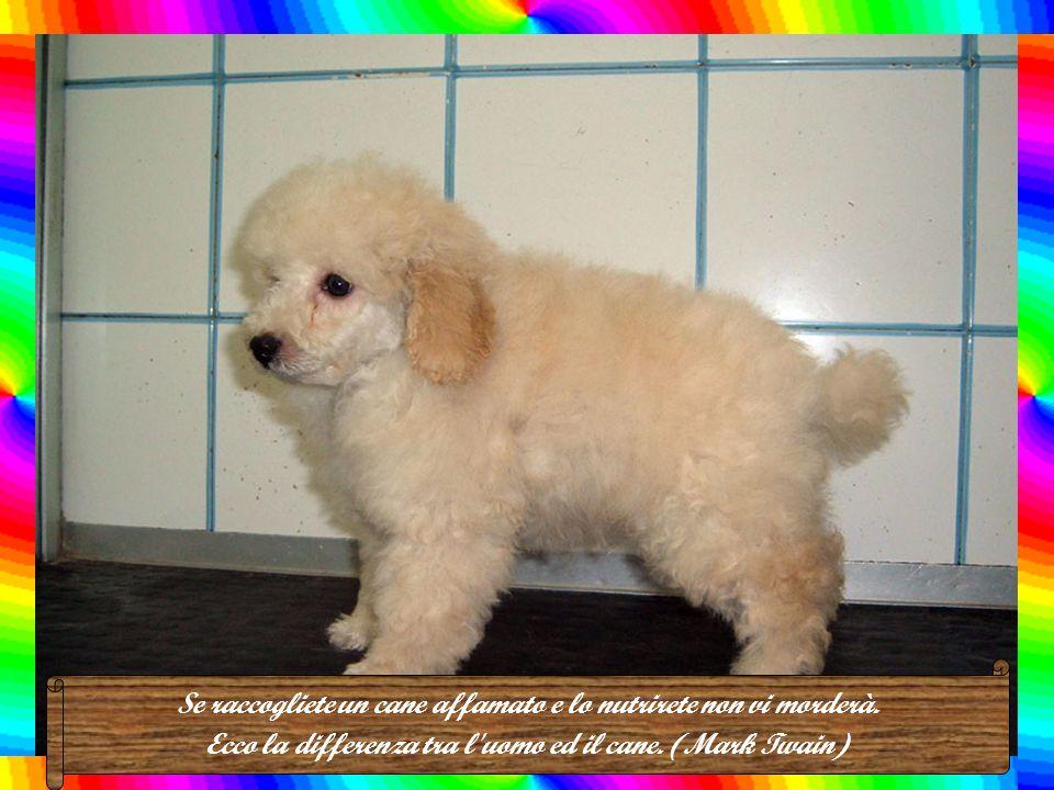 L'anima di un cane fedele va in Paradiso a raggiungere l'essere che ama. (J. Moinaut)