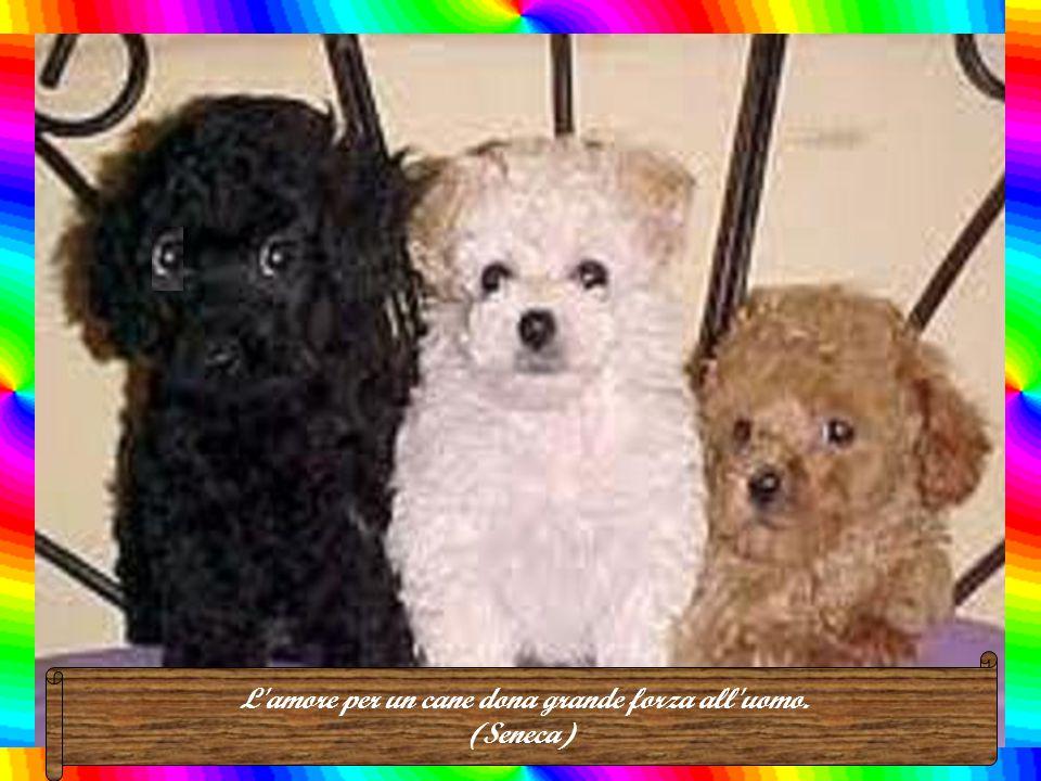 I cani non sono tutto nella vita, ma riempiono la nostra esistenza. (R. Caras)