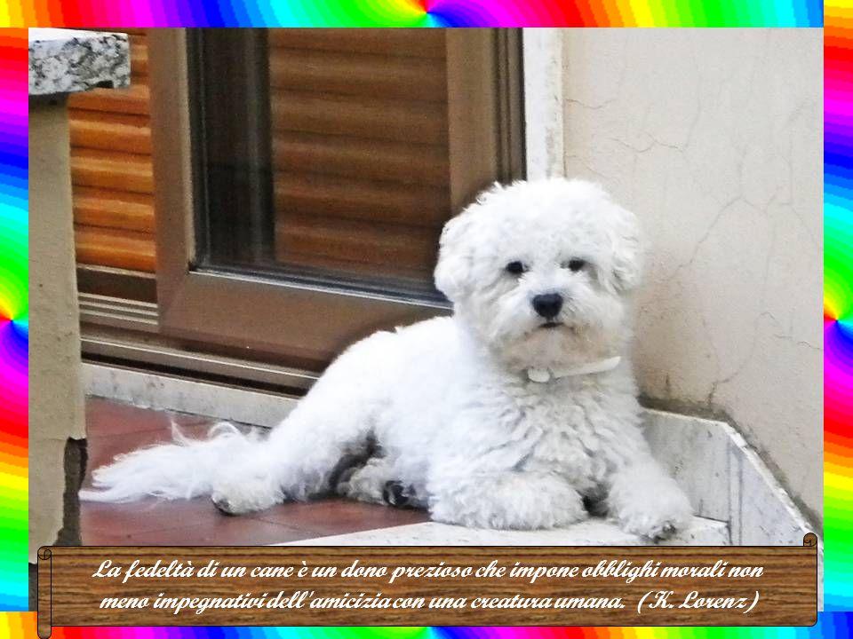 La maggior parte delle persone che hanno un cane, alla lunga imparano ad obbedire al loro amico a quattro zampe. (Robert Morley)