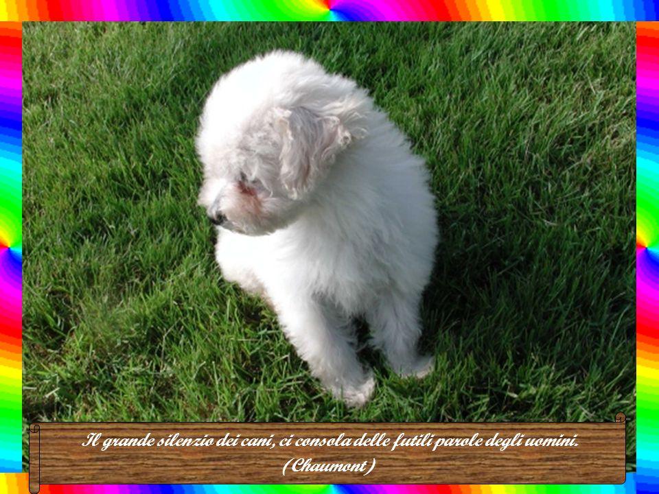L'amicizia del cane, è senza dubbio, più viva e costante di quella dell'uomo. (M. de Montaigne)