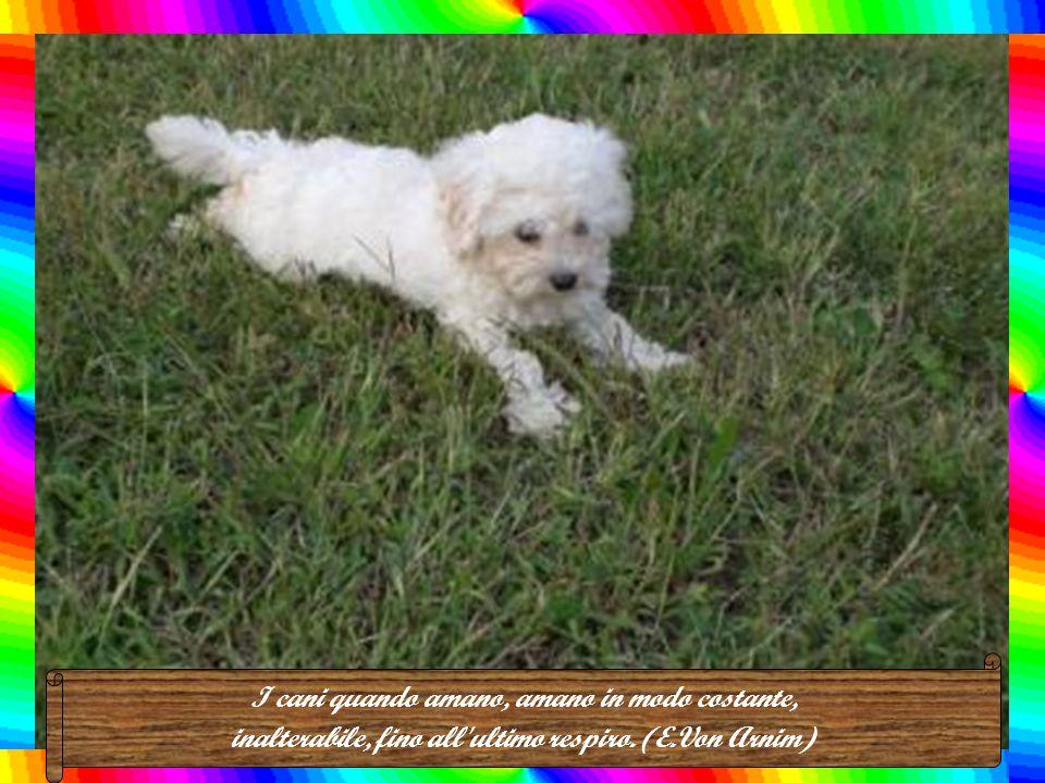 Il luogo migliore dove seppellire un bravo cane è il cuore del suo padrone. (Ben Hur Lampman)