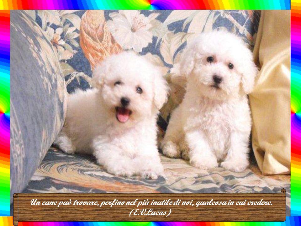 Un cane comune è più simpatico di una persona comune. (Andrew A. Rooney)