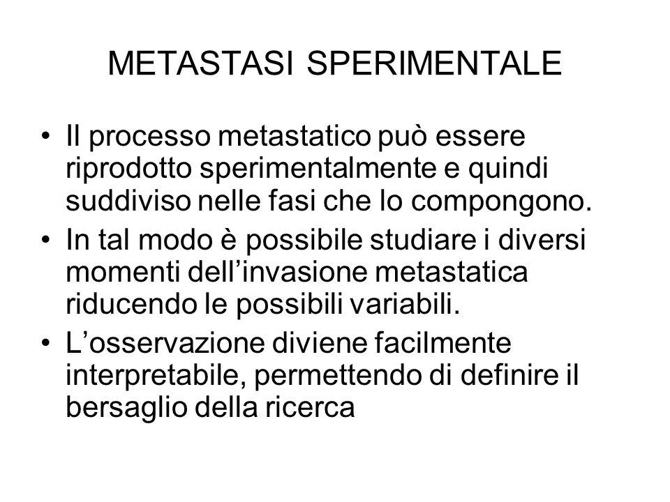 METASTASI SPERIMENTALE Il processo metastatico può essere riprodotto sperimentalmente e quindi suddiviso nelle fasi che lo compongono. In tal modo è p