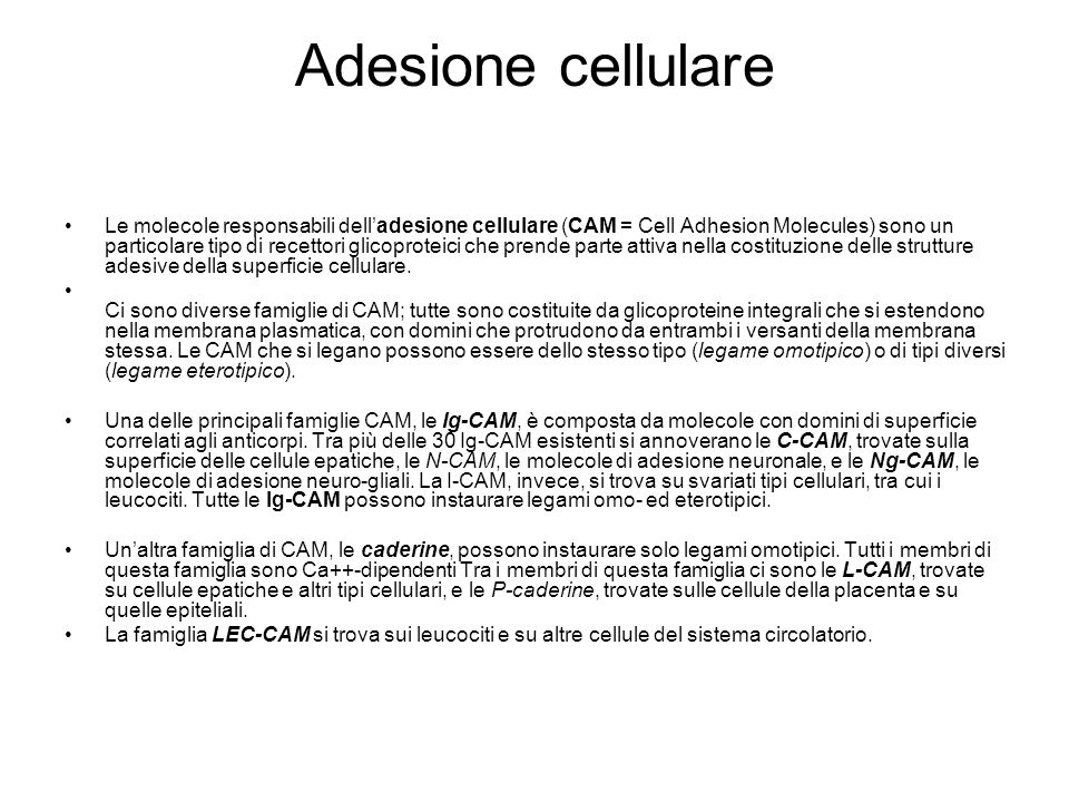 Adesione cellulare Le molecole responsabili dell'adesione cellulare (CAM = Cell Adhesion Molecules) sono un particolare tipo di recettori glicoproteic