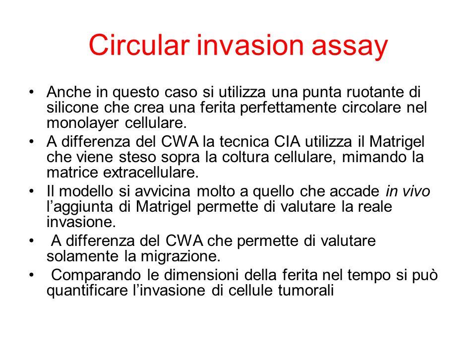 Circular invasion assay Anche in questo caso si utilizza una punta ruotante di silicone che crea una ferita perfettamente circolare nel monolayer cell