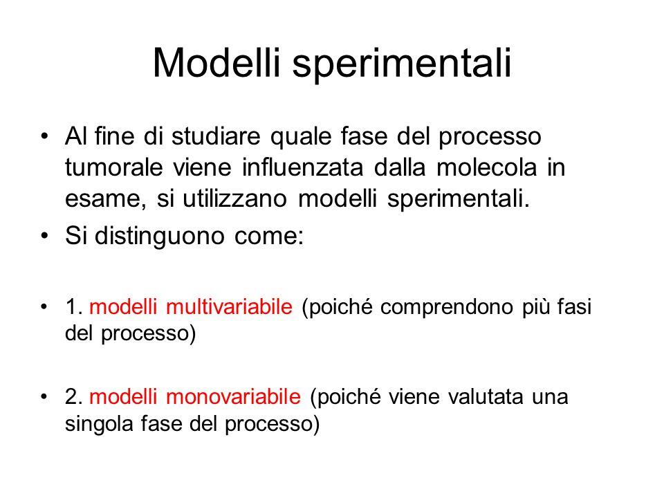 Modelli sperimentali Al fine di studiare quale fase del processo tumorale viene influenzata dalla molecola in esame, si utilizzano modelli sperimental