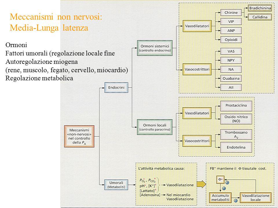 Meccanismi non nervosi: Media-Lunga latenza Ormoni Fattori umorali (regolazione locale fine Autoregolazione miogena (rene, muscolo, fegato, cervello, miocardio) Regolazione metabolica