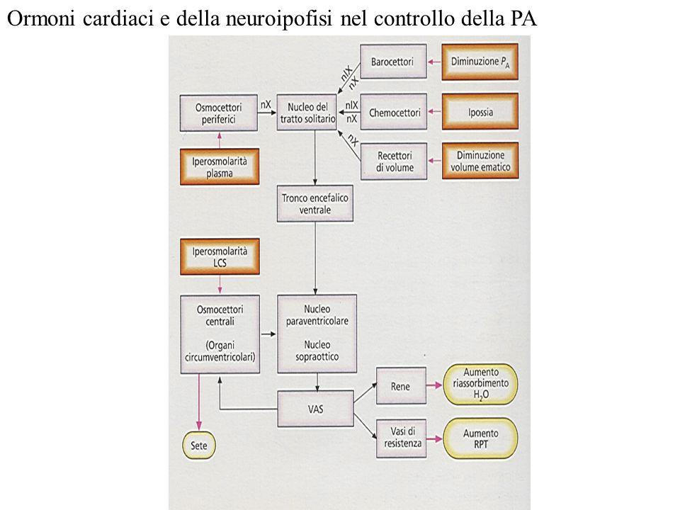 Ormoni cardiaci e della neuroipofisi nel controllo della PA