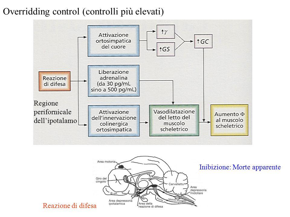 Overridding control (controlli più elevati) Regione perifornicale dell'ipotalamo Inibizione: Morte apparente Reazione di difesa