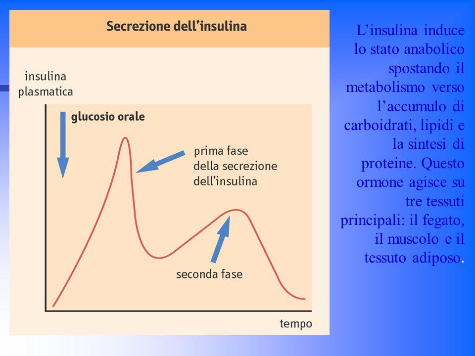 L'insulina induce lo stato anabolico spostando il metabolismo verso l'accumulo di carboidrati, lipidi e la sintesi di proteine. Questo ormone agisce s