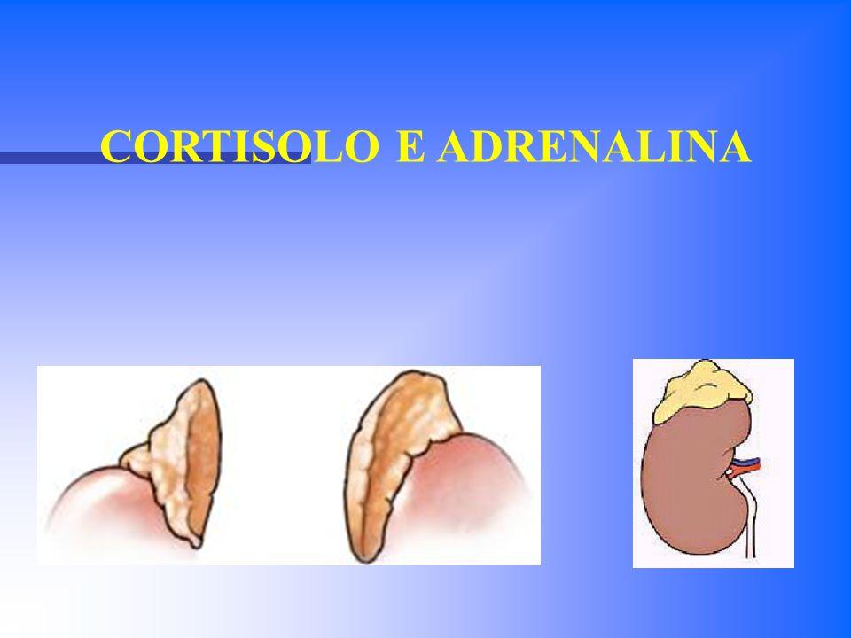 Sono due ghiandole che si trovano al di sopra dei reni.