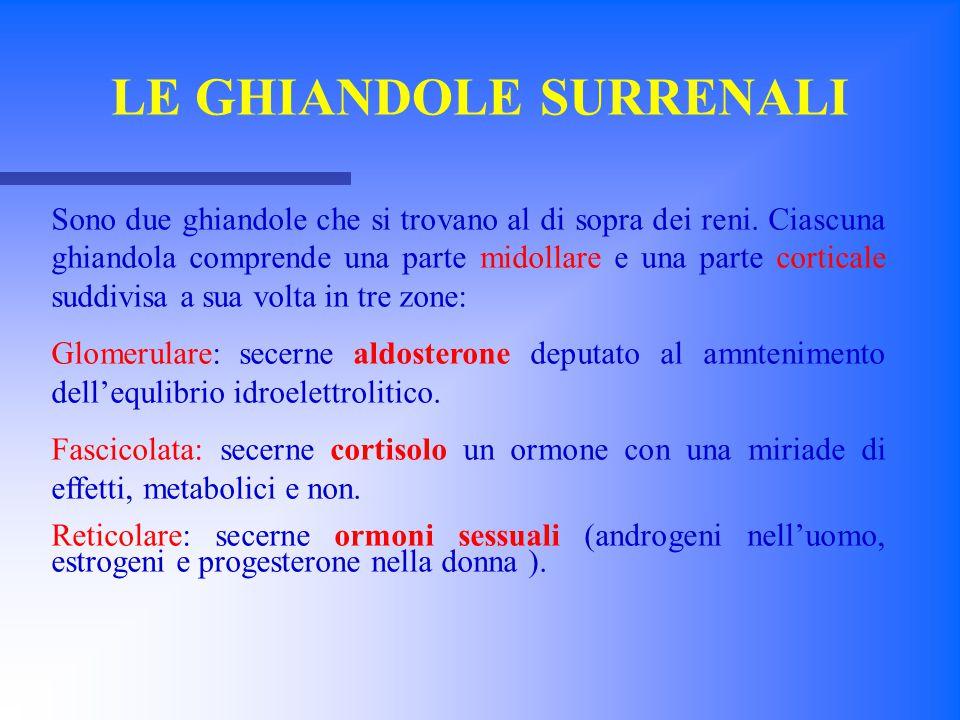 La parte midollare più interna è correlata al sistema simpatico (20% della ghiandola) e secerne adrenalina e noradrenalina(a partire dall'aminoacido tirosina) in seguito a stimolazione simpatica.