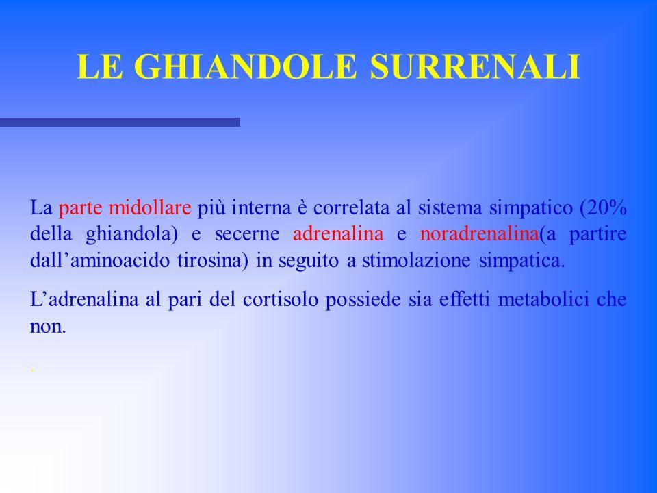 La parte midollare più interna è correlata al sistema simpatico (20% della ghiandola) e secerne adrenalina e noradrenalina(a partire dall'aminoacido t