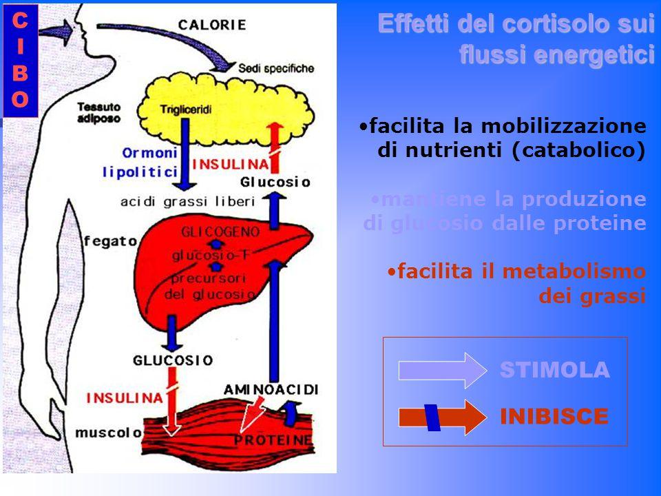 Effetti del cortisolo sui flussi energetici facilita la mobilizzazione di nutrienti (catabolico) mantiene la produzione di glucosio dalle proteine fac