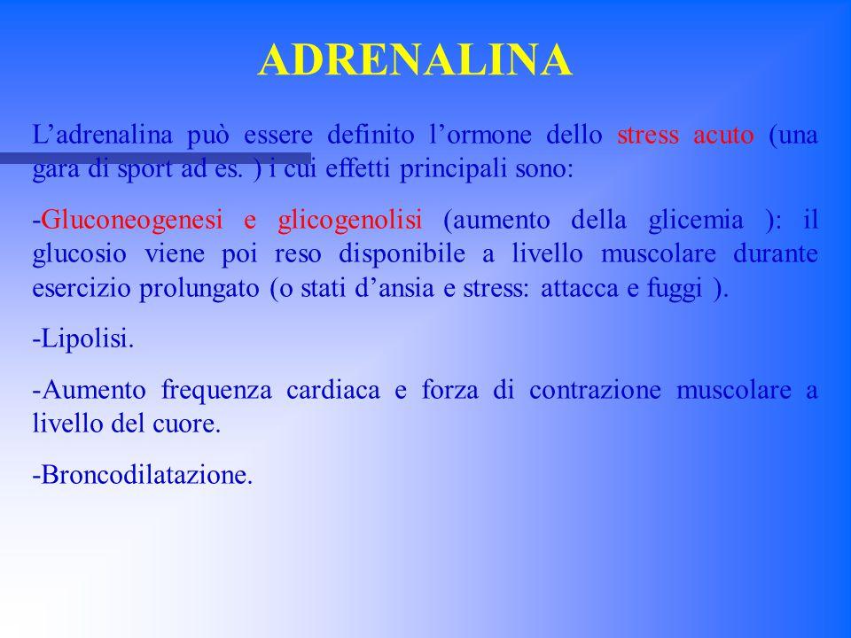 ADRENALINA L'adrenalina può essere definito l'ormone dello stress acuto (una gara di sport ad es. ) i cui effetti principali sono: -Gluconeogenesi e g