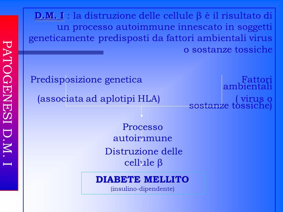 PATOGENESI D.M. I D.M. I D.M. I : la distruzione delle cellule β è il risultato di un processo autoimmune innescato in soggetti geneticamente predispo