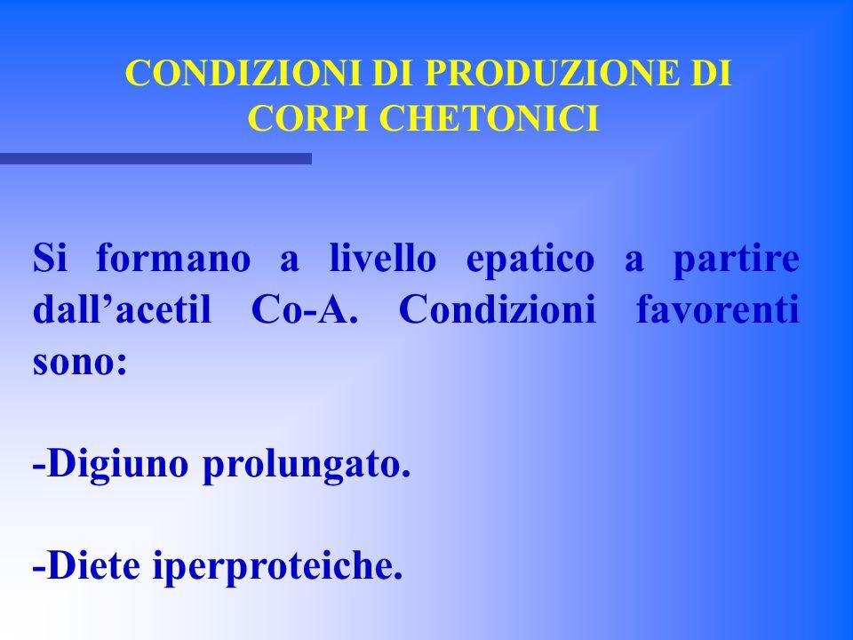 CONDIZIONI DI PRODUZIONE DI CORPI CHETONICI Si formano a livello epatico a partire dall'acetil Co-A. Condizioni favorenti sono: -Digiuno prolungato. -
