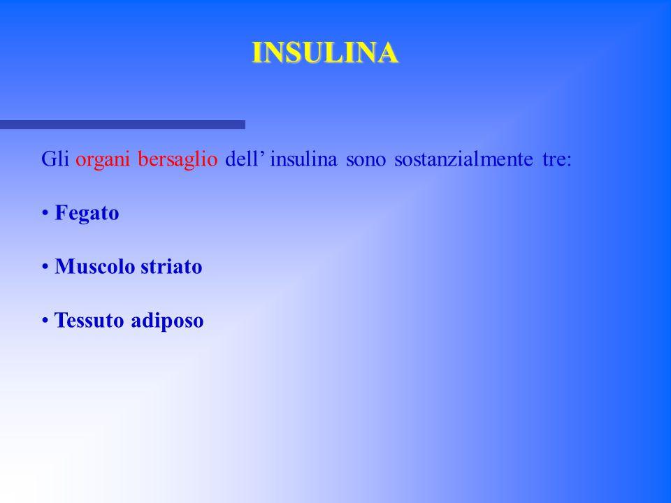 Gli organi bersaglio dell' insulina sono sostanzialmente tre: Fegato Muscolo striato Tessuto adiposo INSULINA