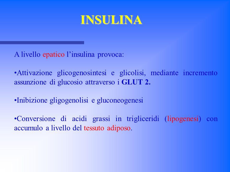A livello epatico l'insulina provoca: Attivazione glicogenosintesi e glicolisi, mediante incremento assunzione di glucosio attraverso i GLUT 2. Inibiz