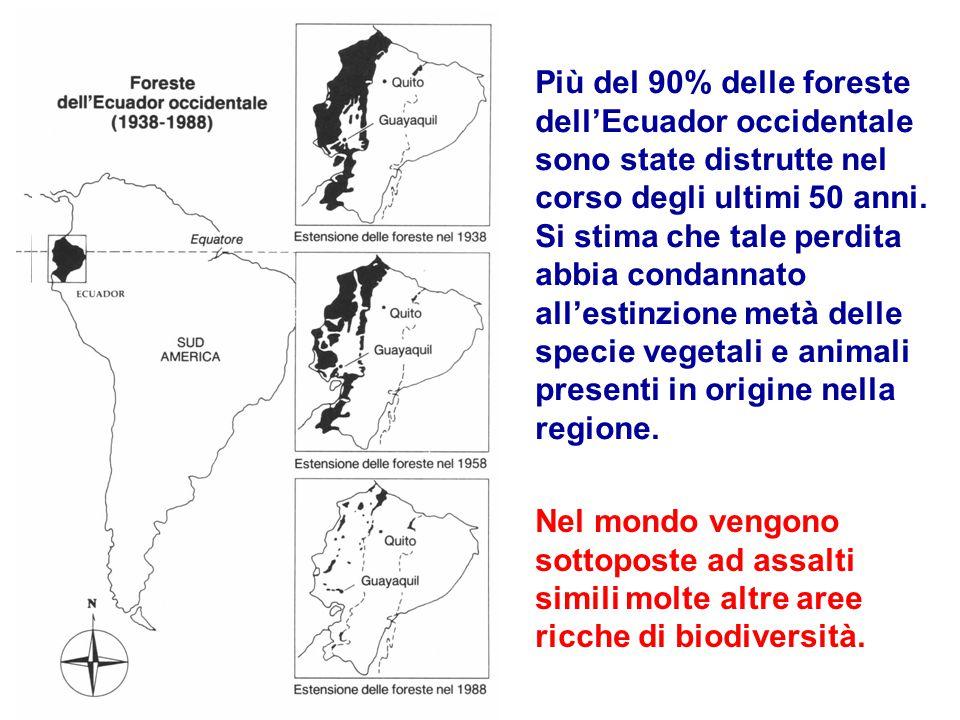 Più del 90% delle foreste dell'Ecuador occidentale sono state distrutte nel corso degli ultimi 50 anni.