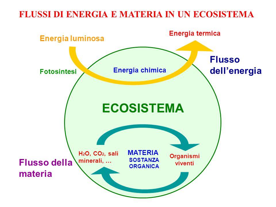 Energia luminosa Fotosintesi Energia chimica Energia termica ECOSISTEMA Flusso dell'energia Flusso della materia H 2 O, CO 2, sali minerali, … Organismi viventi MATERIA SOSTANZA ORGANICA FLUSSI DI ENERGIA E MATERIA IN UN ECOSISTEMA