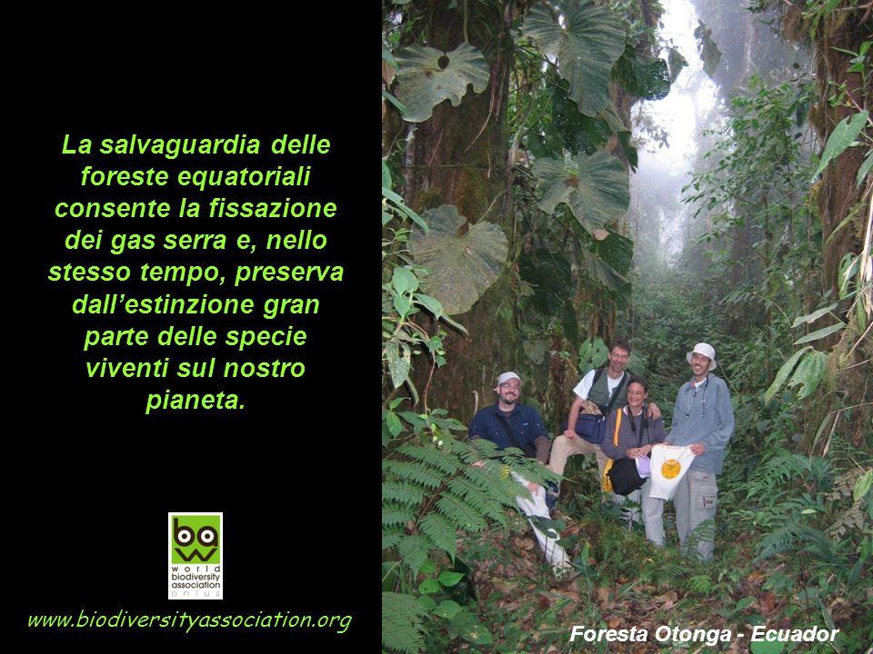 La salvaguardia delle foreste equatoriali consente la fissazione dei gas serra e, nello stesso tempo, preserva dall'estinzione gran parte delle specie viventi sul nostro pianeta.