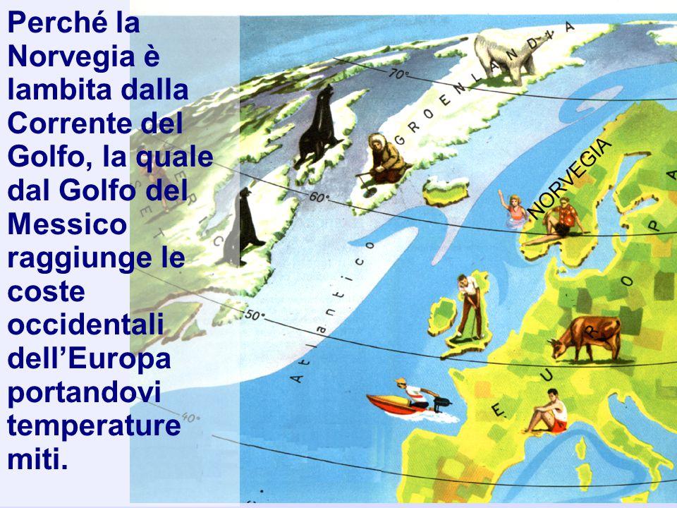 Perché la Norvegia è lambita dalla Corrente del Golfo, la quale dal Golfo del Messico raggiunge le coste occidentali dell'Europa portandovi temperatur