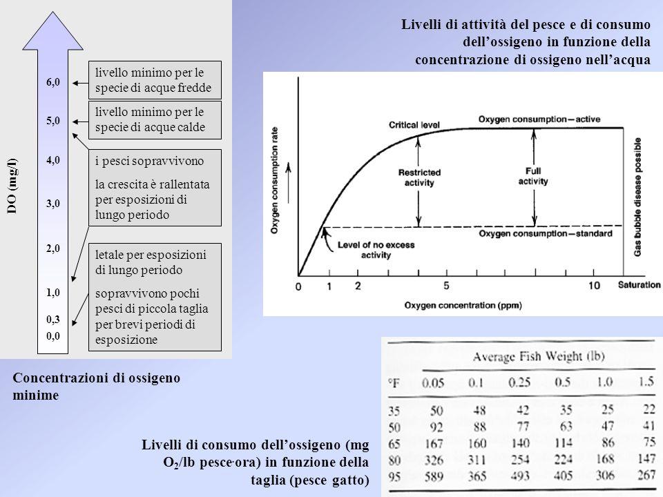 Livelli di attività del pesce e di consumo dell'ossigeno in funzione della concentrazione di ossigeno nell'acqua 0,0 0,3 1,0 2,0 3,0 4,0 6,0 letale per esposizioni di lungo periodo sopravvivono pochi pesci di piccola taglia per brevi periodi di esposizione i pesci sopravvivono la crescita è rallentata per esposizioni di lungo periodo 5,0 livello minimo per le specie di acque calde livello minimo per le specie di acque fredde DO (mg/l) Livelli di consumo dell'ossigeno (mg O 2 /lb pesce.