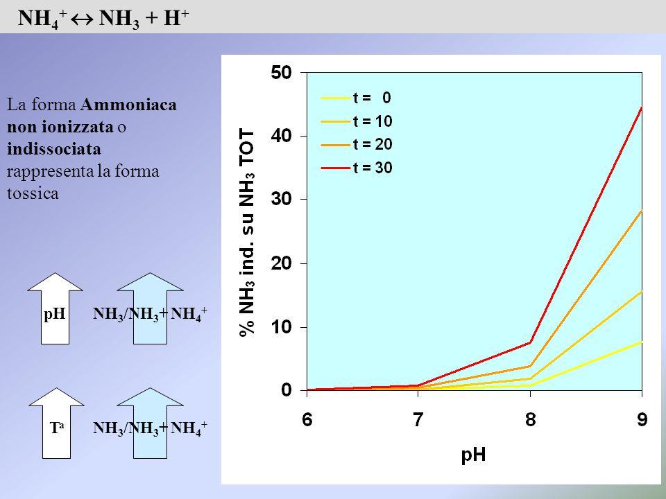 NH 4 +  NH 3 + H + La forma Ammoniaca non ionizzata o indissociata rappresenta la forma tossica TaTa NH 3 /NH 3 + NH 4 + pH NH 3 /NH 3 + NH 4 +