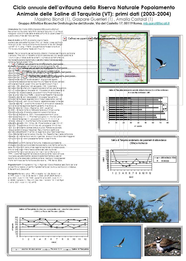 Ciclo annuale dell'avifauna della Riserva Naturale Popolamento Animale delle Saline di Tarquinia (VT): primi dati (2003-2004) Massimo Biondi (1), Gasp