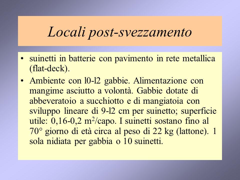 Locali post-svezzamento suinetti in batterie con pavimento in rete metallica (flat-deck). Ambiente con l0-l2 gabbie. Alimentazione con mangime asciutt