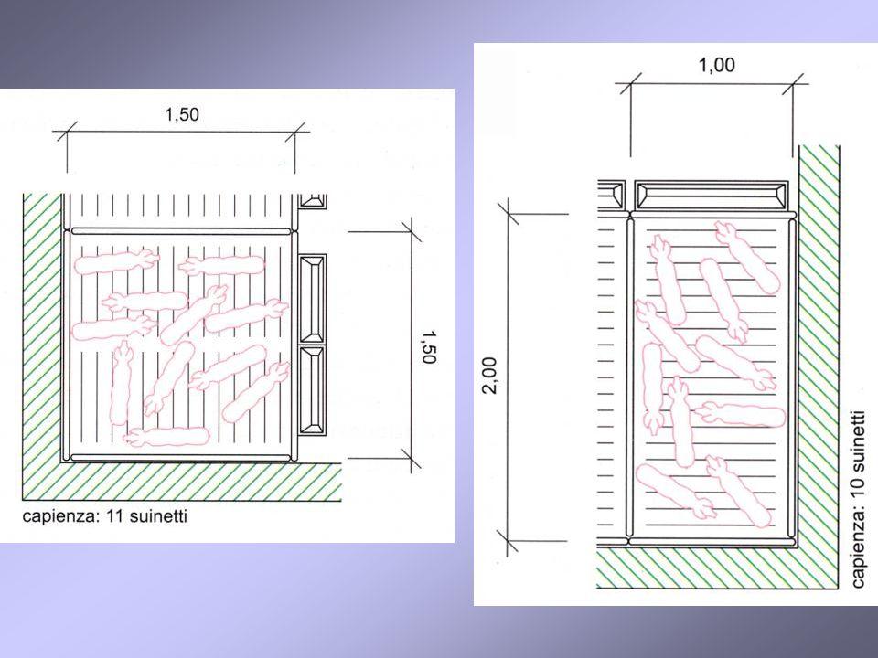 ingrasso Ogni box della capienza di 15 capi grossi prevede: apertura di accesso a corsia di defecazione, dimensione 0,70 x 0,90 m, protetta da stuoia di gomma o in plastica; pavimento con pendenza verso l esterno del 2%.